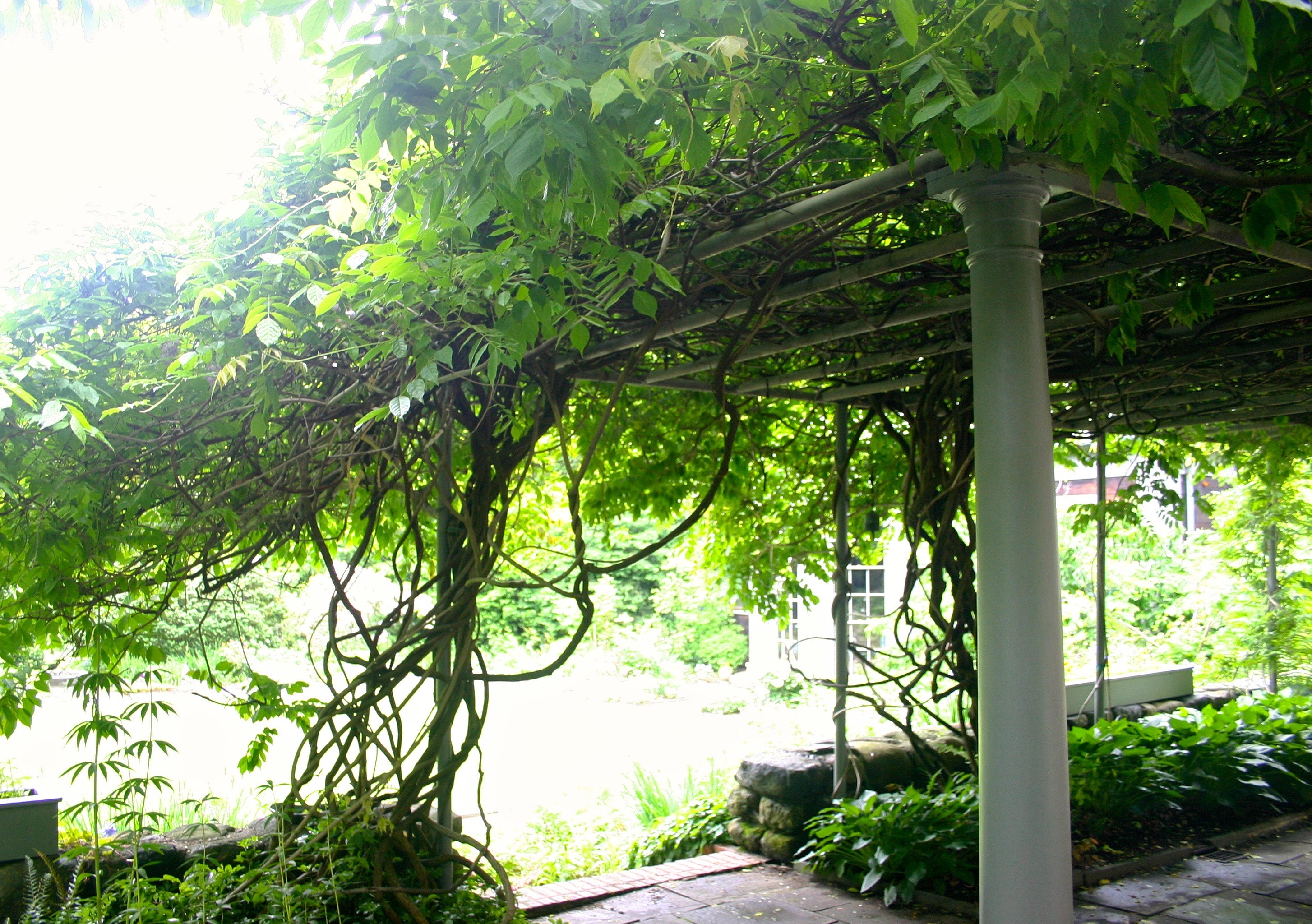 A vine-covered canopy on the patio & Brunch in Belmont | The Modern Harpist